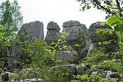 Le Bois de Païolive en Ardèche