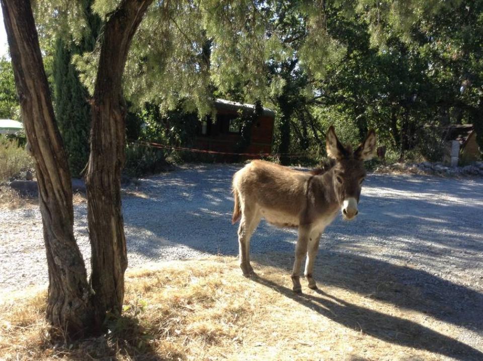 Petits ânes du Domaine Saint Cerice