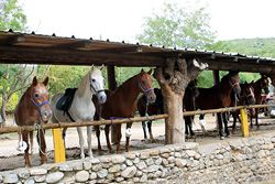 Ranch des Gorges de l'Ardèche