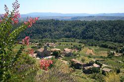 Ribes en Ardèche
